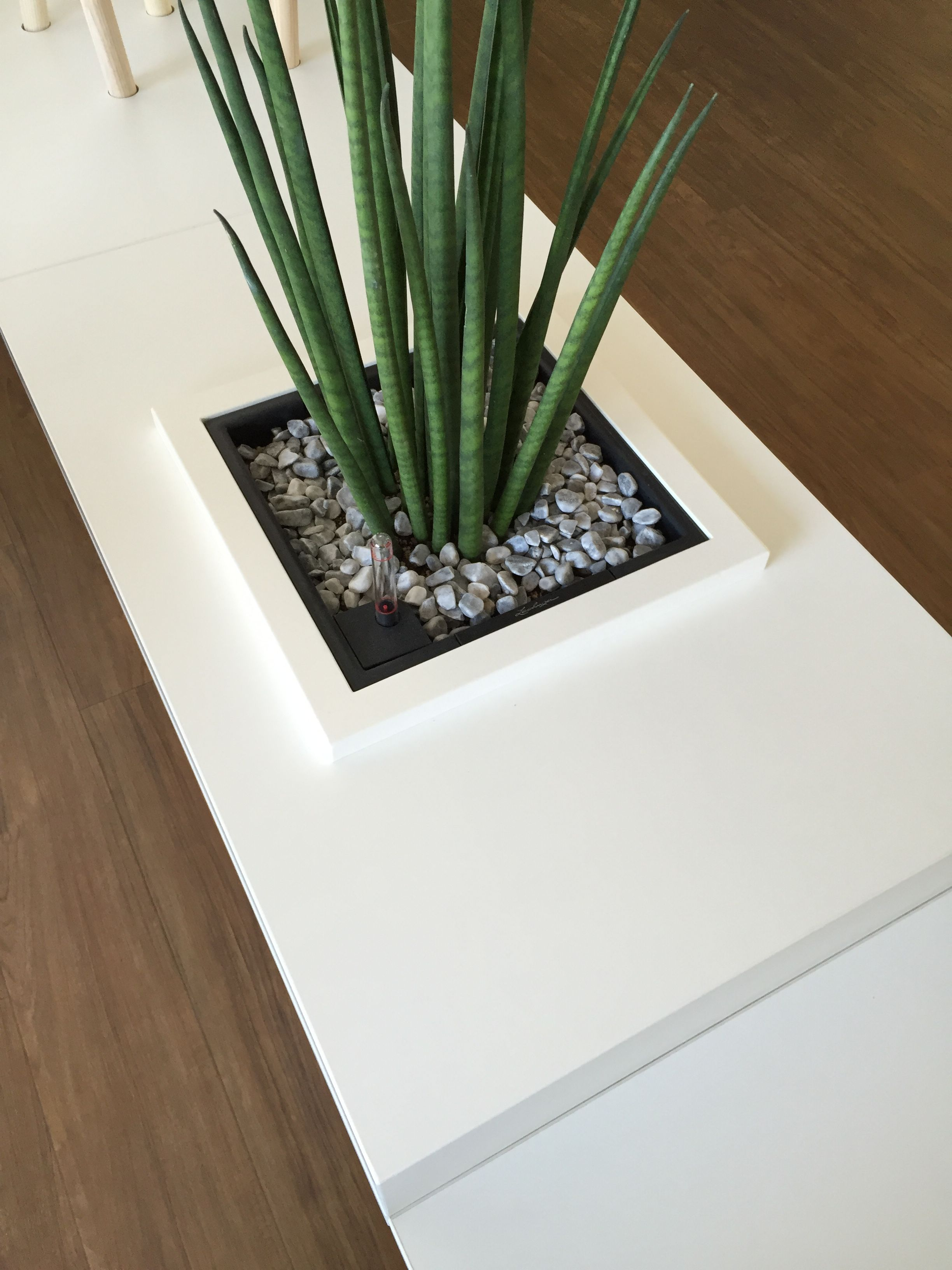 Raumteiler mit Pflanze by kühnle\'waiko #office #furniture #workspace ...