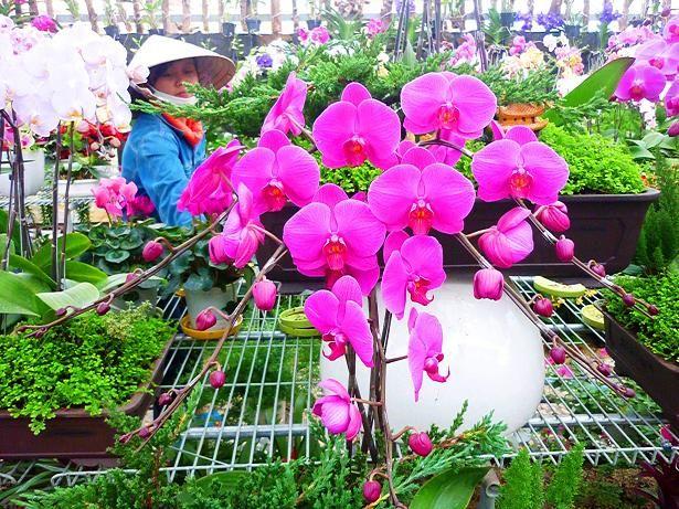 schöne Blumen- #AsiaticaReisen