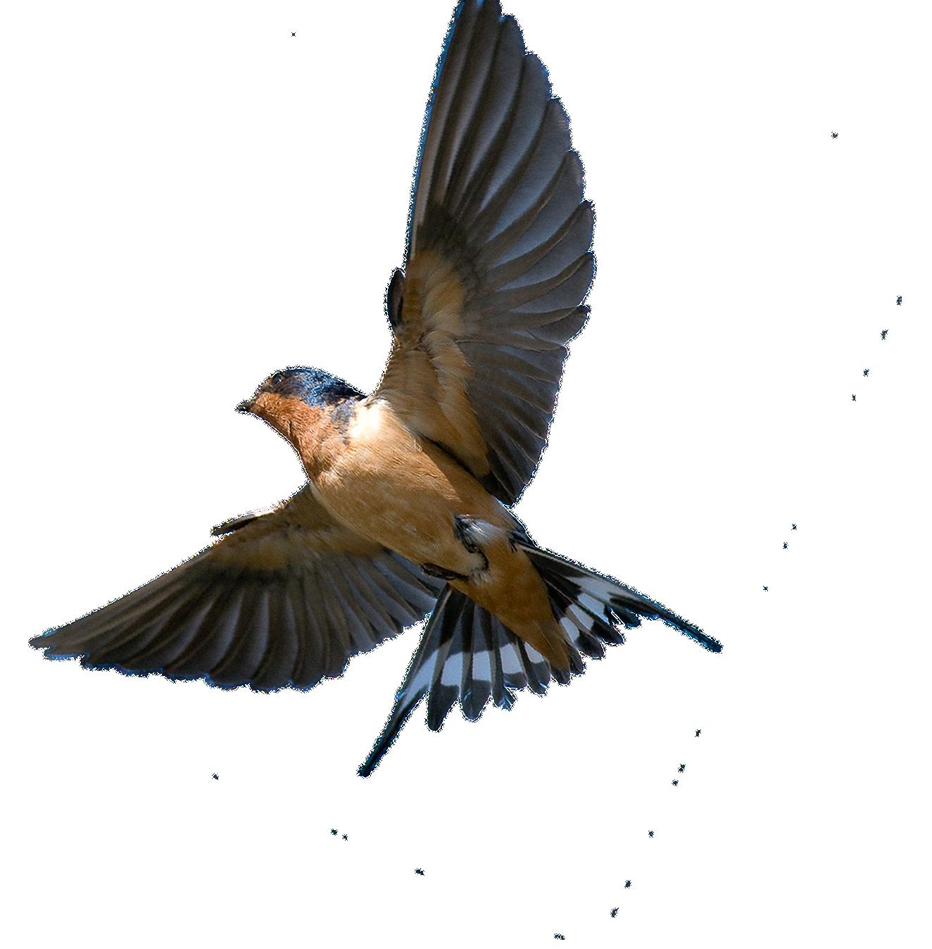 Птицы в полете картинки для детей