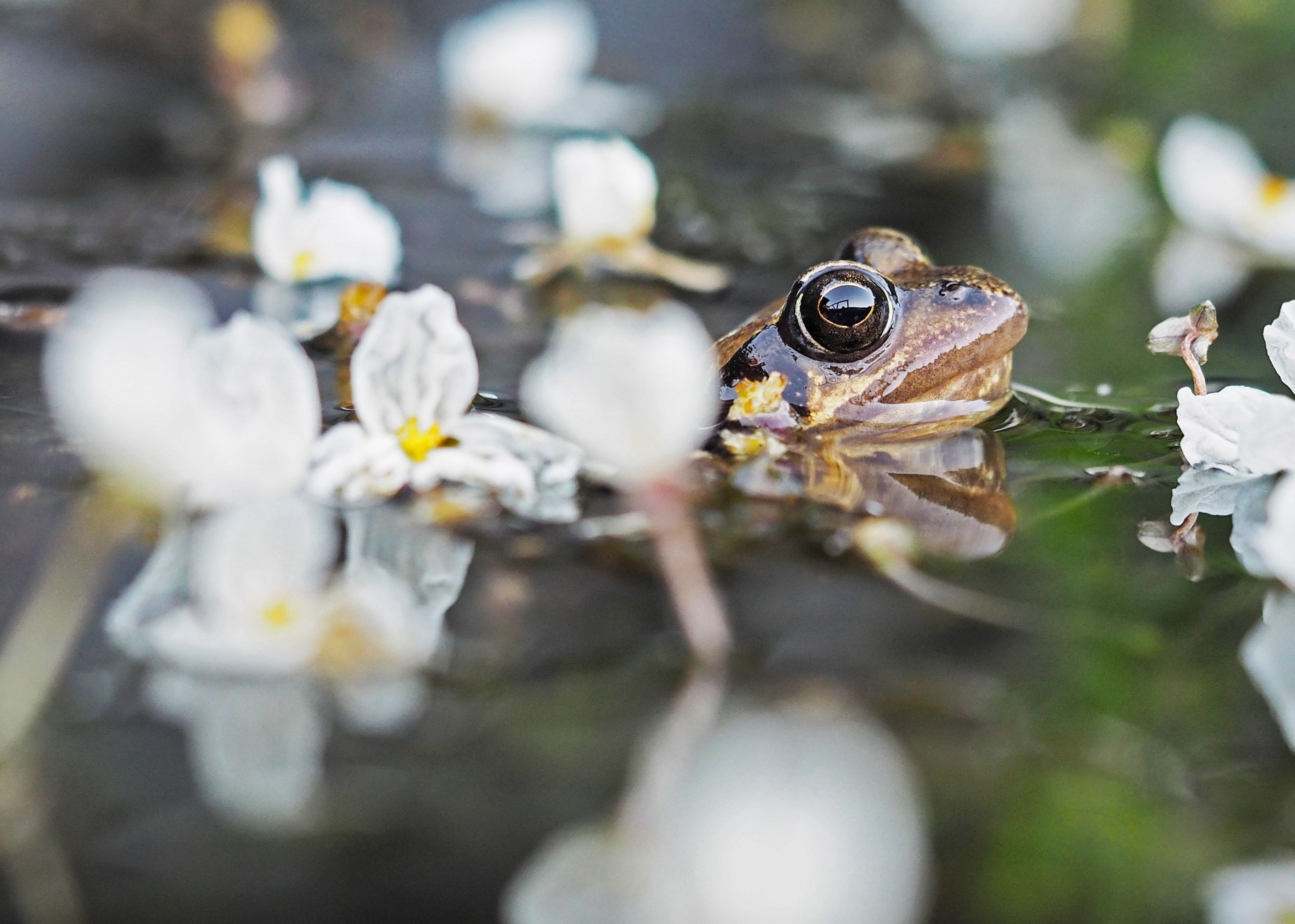 Hd Frog Images