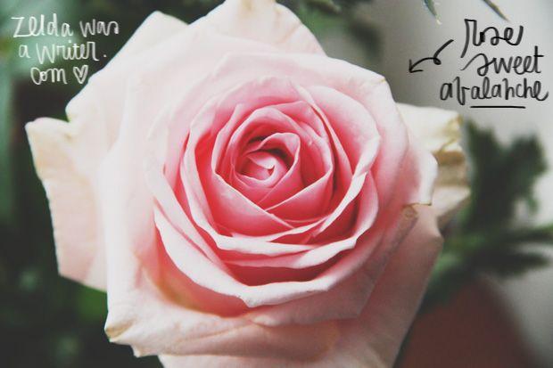 frasi buongiorno con fiori