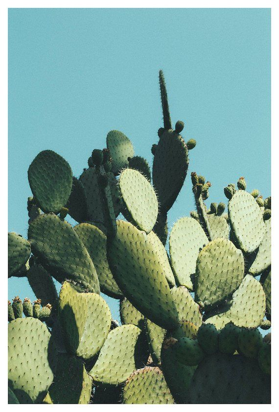Large Modern Cactus Art Print, Extra Large Wall Decor, Bedroom Decor, Cactus Poster print, Cactus Art Decor