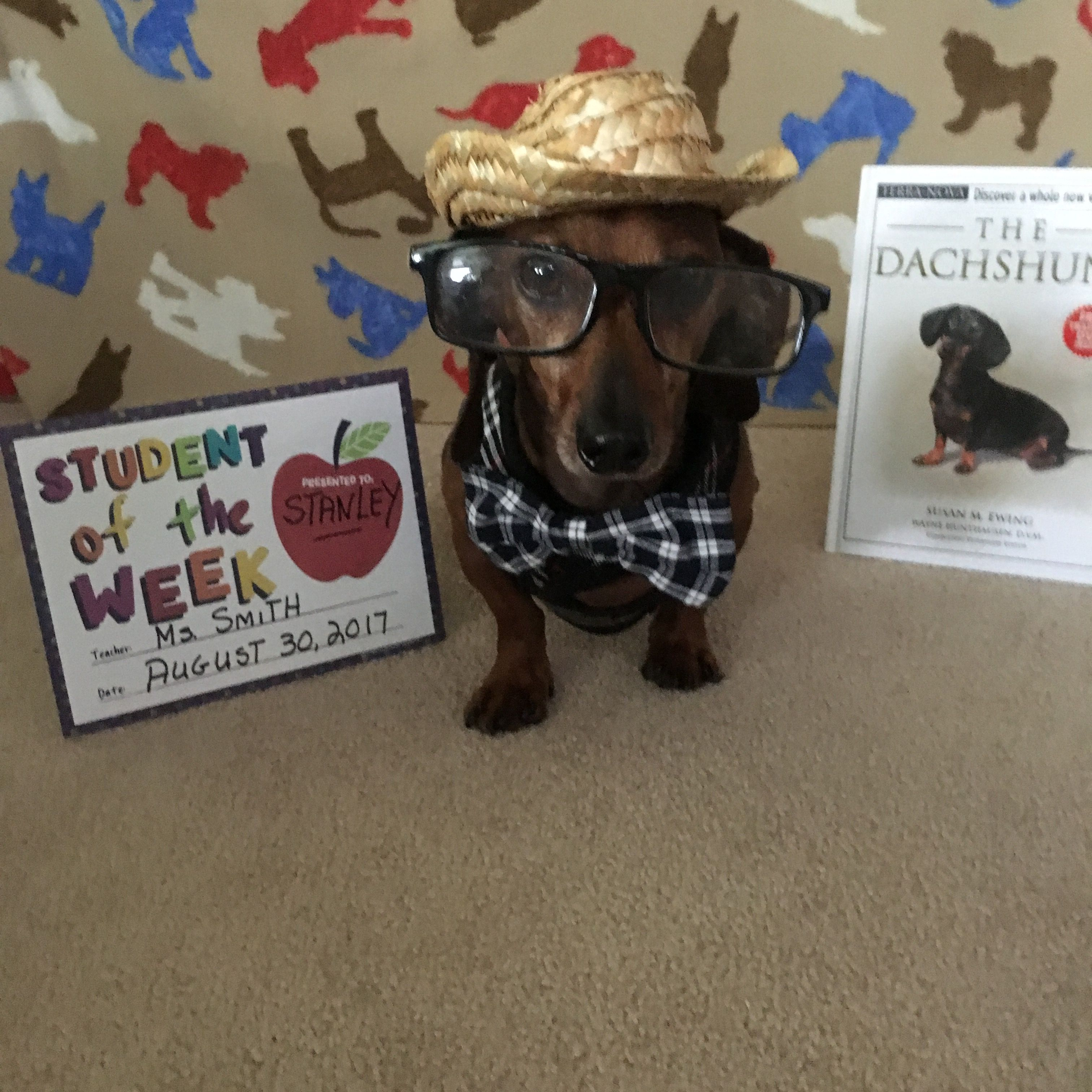 My First Day Of School Training Your Puppy Puppies Dachshund