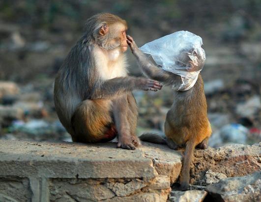 Výsledek obrázku pro animal and plastic