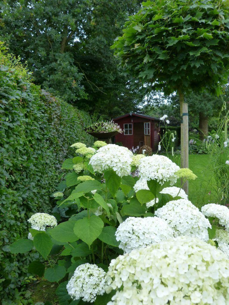 Als Hingucker vor grüner Hecke Garten Pinterest