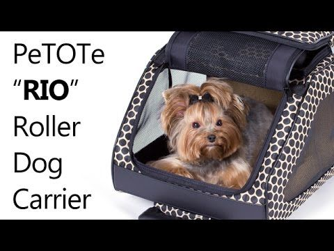 The Best for Small Dogs: Dog Carriers, Pet Carrier & Dog Bed