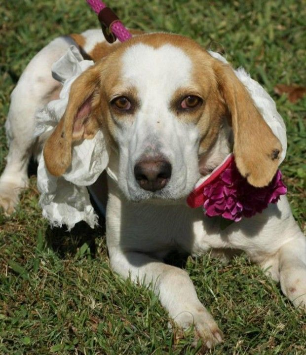 Southern Hound Needs A Home Rescue Dogs Pets Animals