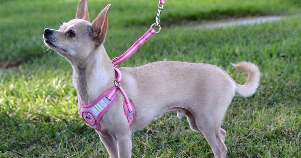 The Dog Geek: Product Review: AibaoPet Harness and Leash