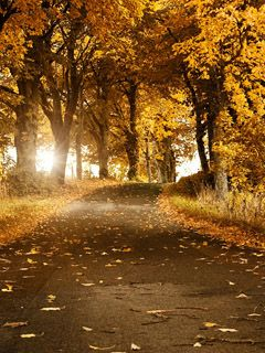 Download Yellow Autumn Road Wallpaper 37747 From Mobile Wallpapers This Is Compatible For Nokia Samsung Htc Imate
