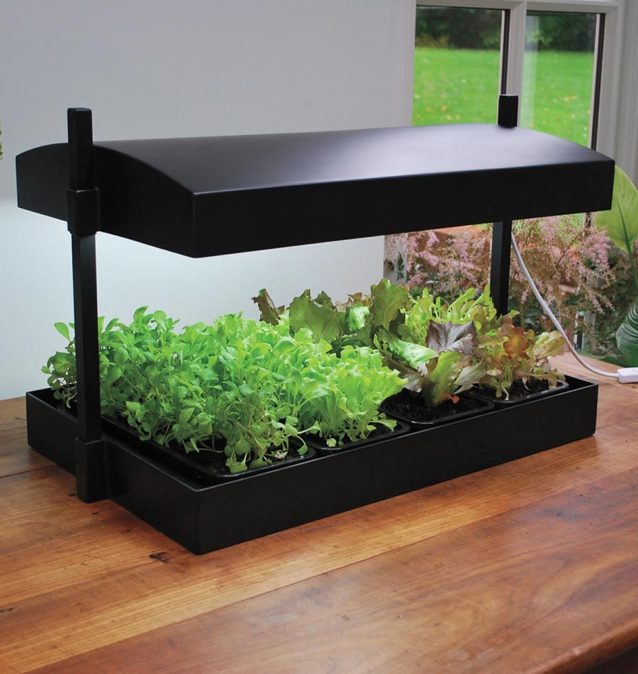 Growlight Garden is the perfect kit for indoor salad or