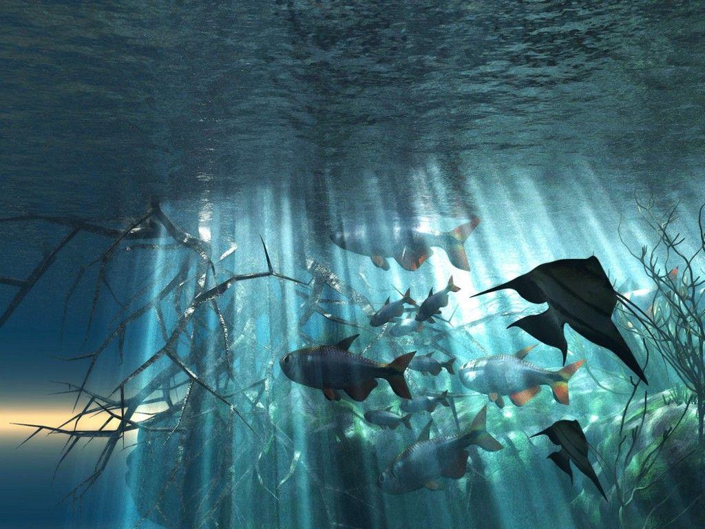 ocean animals underwater | underwater ocean scene - cute wallpaper