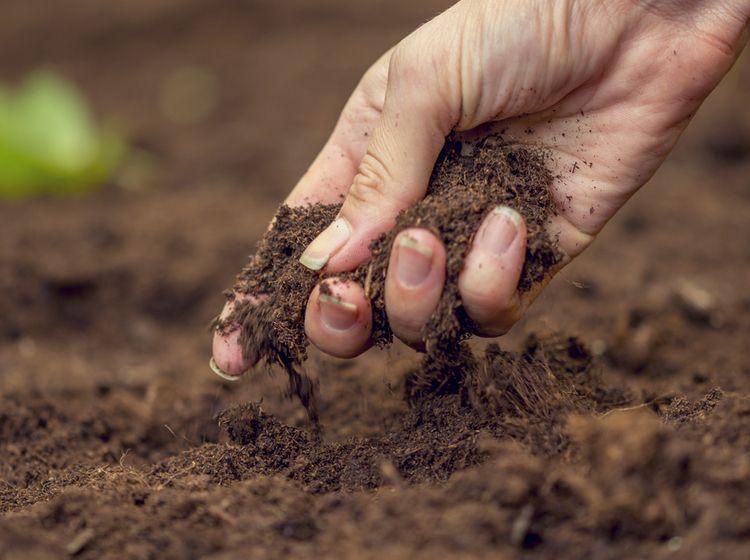 Bodenarten Gartenerde Und Problemboden Gartenerde Garten Garten Pflanzen