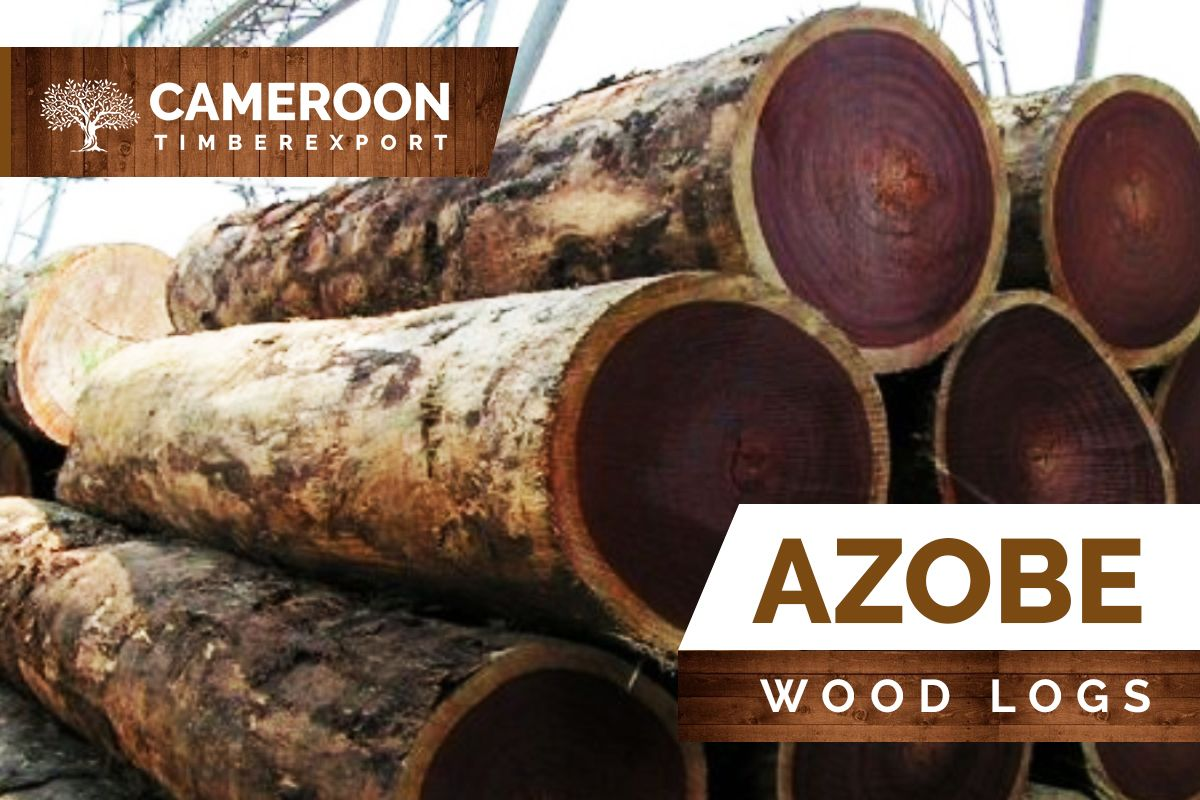 Azobe Is One Of The Most Durable Hardwood Species Cameroon Timber Export Is One Of The Best Azobe Wood Logs Ekki Suppliers In Cameroon Wood Logs Wood Timber