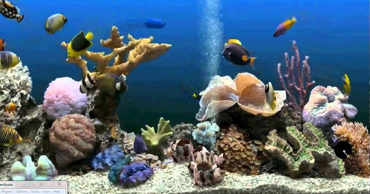 Paling Populer 22 Wallpaper Animasi Ikan Hias Free Wallpaper Aquarium Gerak Download Gambar Wallpaper Ikan Bergerak Gagas Pedi Di 2020 Betta Latar Belakang Aquarium