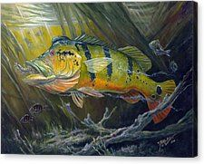 The Great Peacock Bass Canvas Print by Terry  Fox