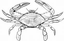 Atlantic Blue Crab coloring page | Free Printable Coloring Pages | 161x247