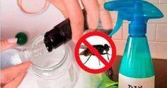Vous n'aurez plus jamais de mouches chez vous grâce à cette mixture | Get rid of flies, Cleaning ...