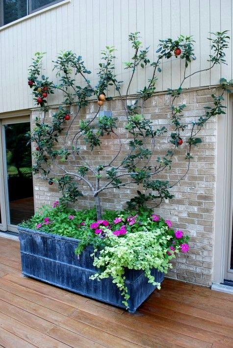 Palmette Dans Bac A Fleurs Arbres En Pots Plantes Comestibles
