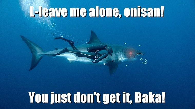 a36325b3eb0cd7c694b926f1dcf1e4c6 shark tsundere meme anime & manga pinterest tsundere, anime