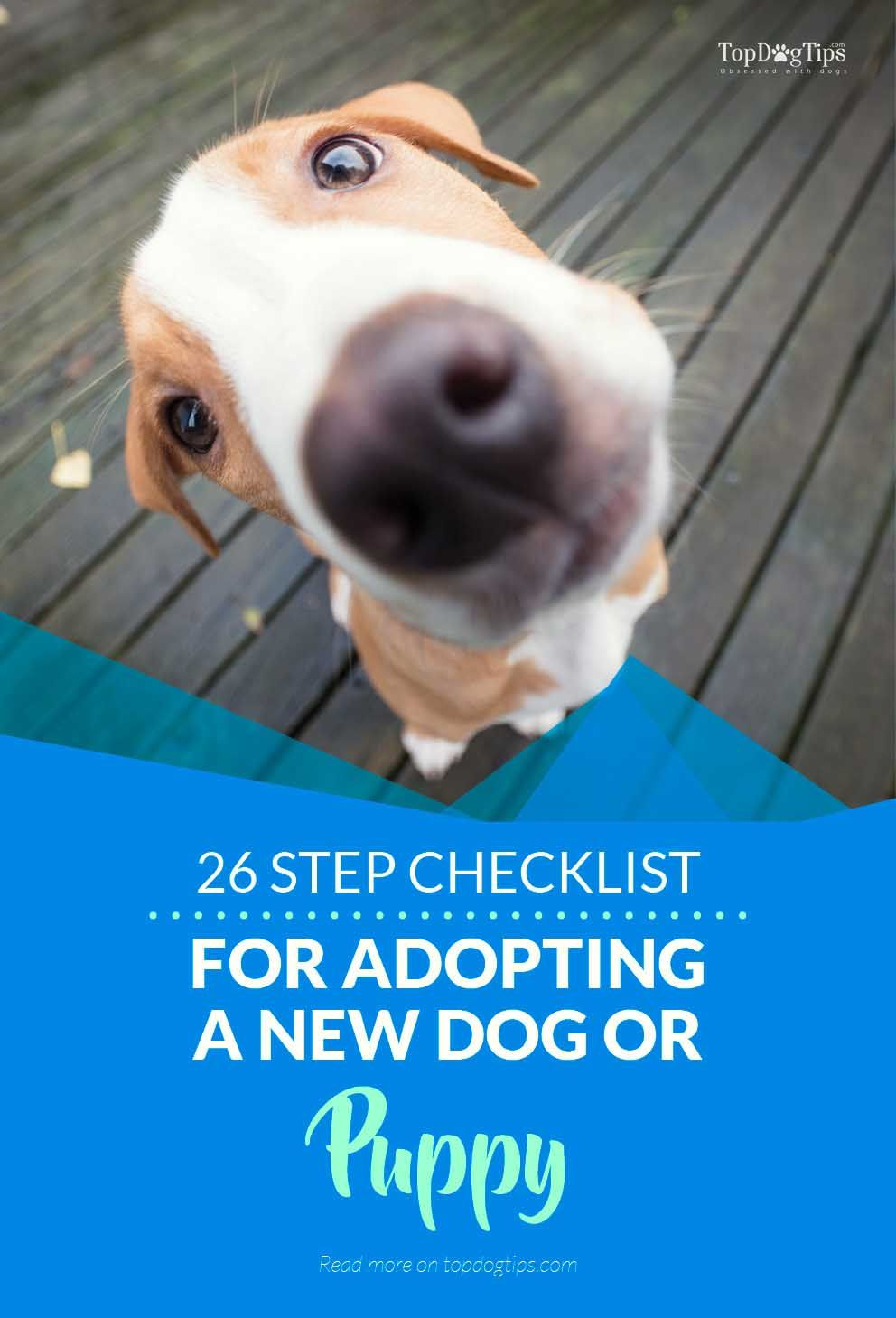 26 Step Checklist For Adopting A New Pup Dog Rescue Shelters