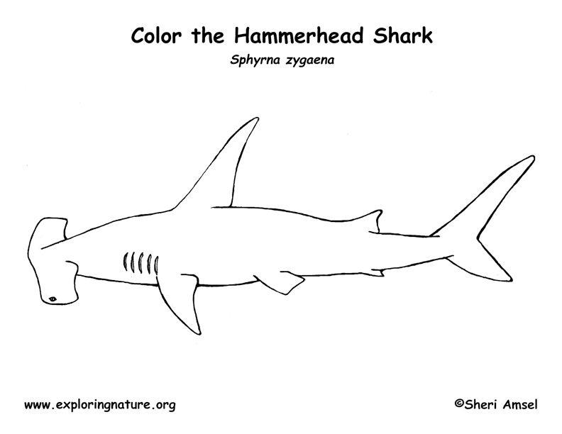 Pin von Exploring Nature: Life Science Website auf Color Animals ...