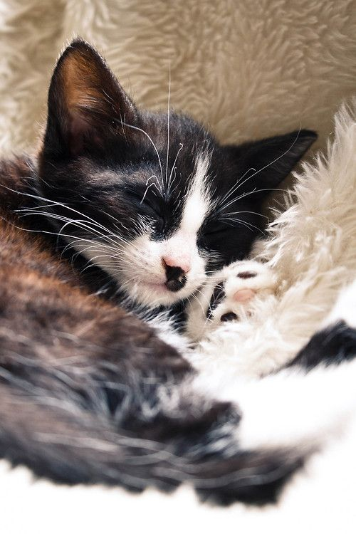 photogenicfelines:  (Younes Eibel)