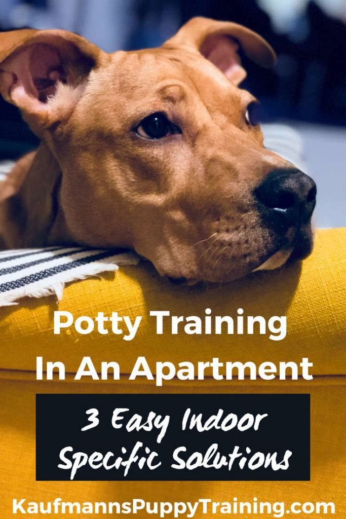 Learning How To Potty Train A Puppy Can Be A Challenge And Living