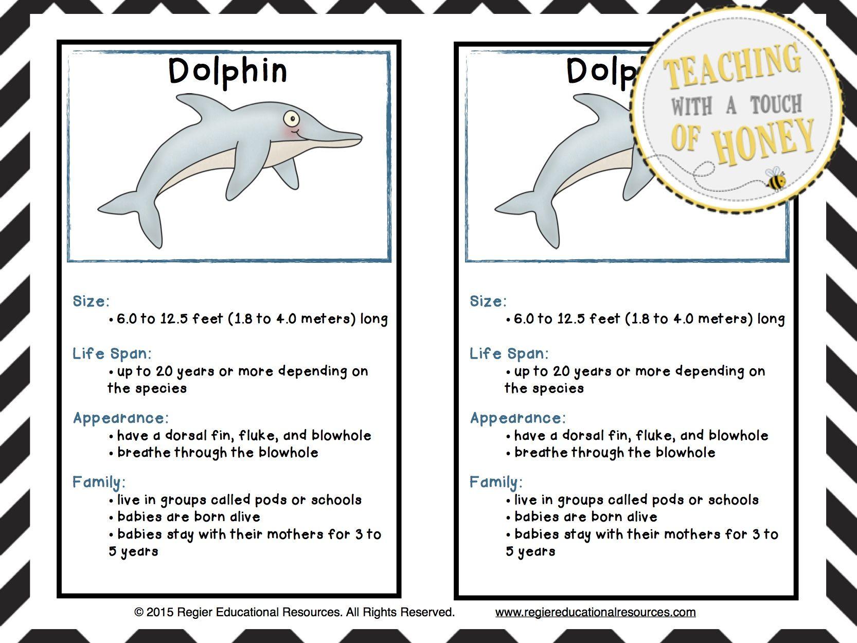 Fauna of the Sea Essay Sample