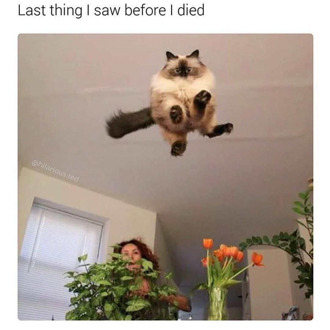 Funny Images Funny Memes Funny Pictures Funny Photo Kitten Quotes Cat Memes Kittens Funny