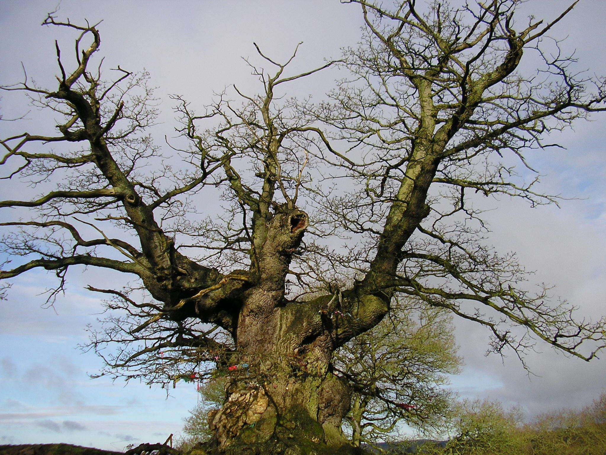 a hamlet near malvern is delving more deeply into its druidic