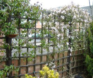 Use wooden trellis fencing to screen areas and provide for Climbing flowering plants for fences