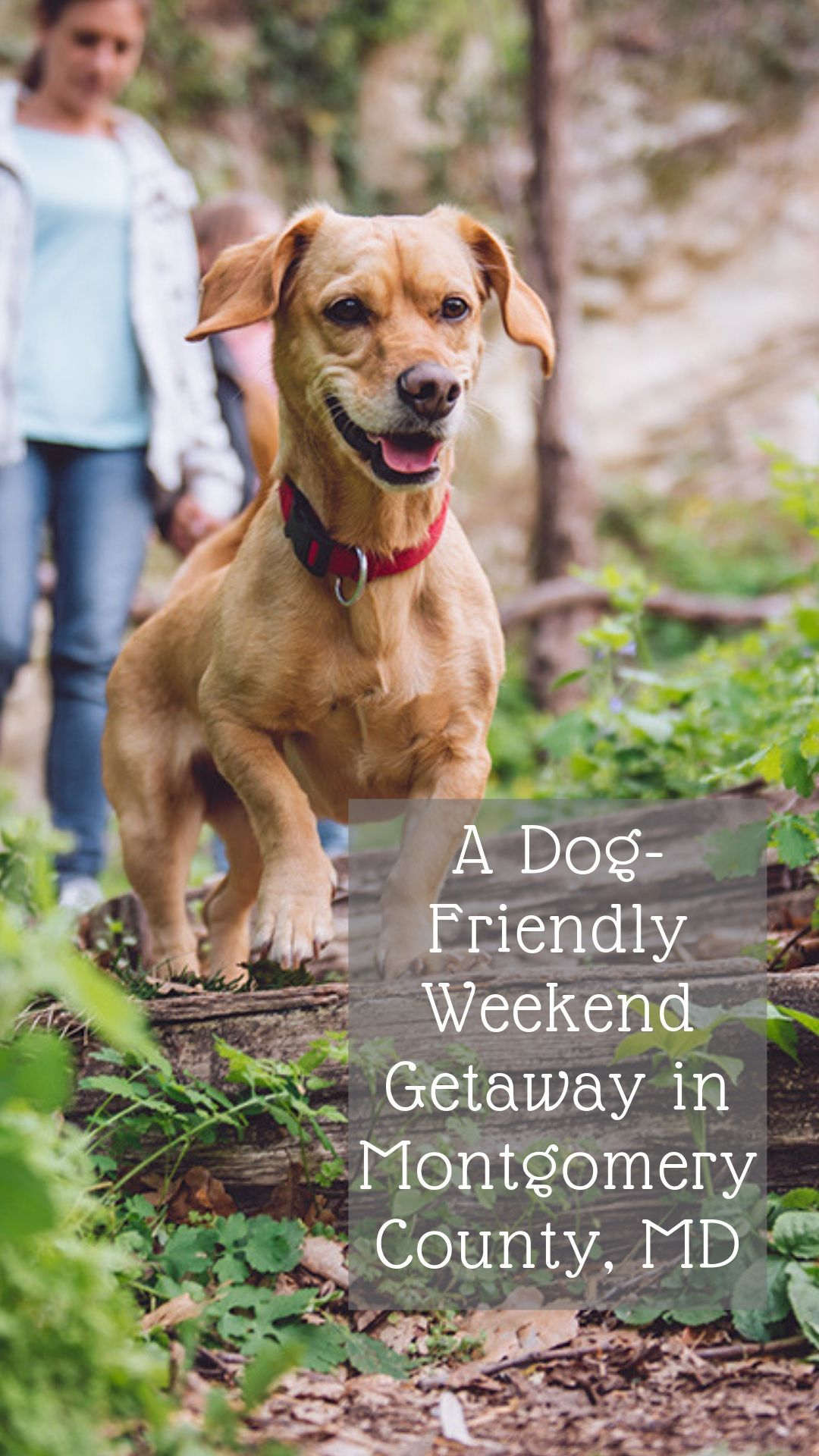 A Dog Friendly Weekend Getaway Dog Friends Dogs Weekend Getaways