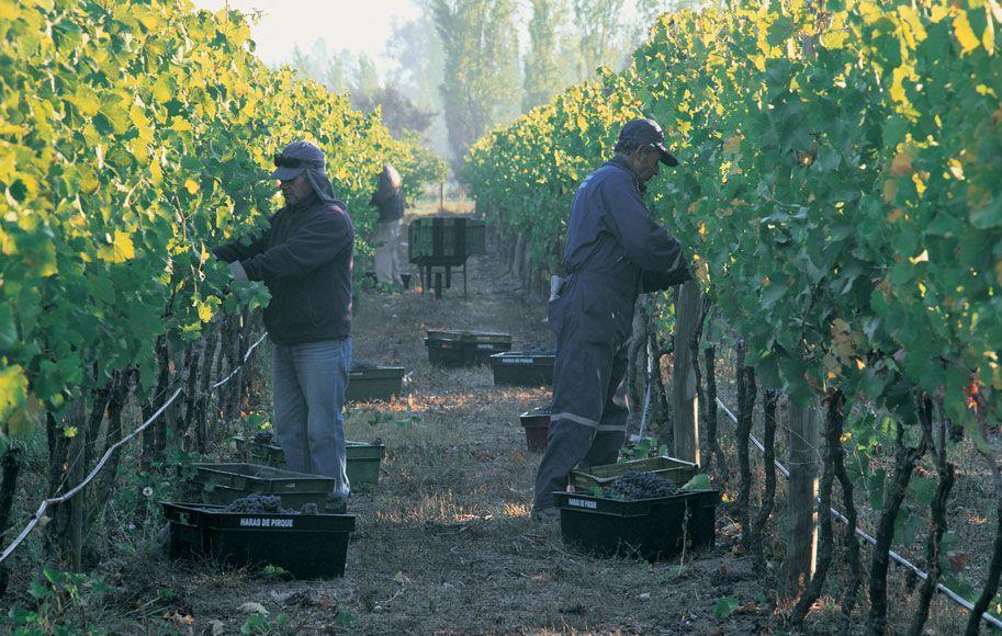 Manejo de viñedos