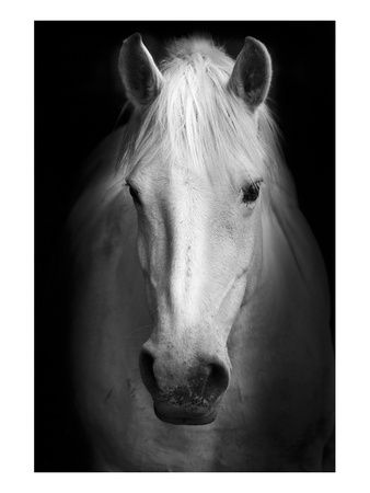Horses Black And White Photography Wall Art And Home Decor At Art Com Image Cheval Peinture Cheval Photographie Noir Et Blanc