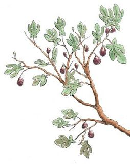 Fig tree drawing with figs tattoos pinterest tattoo for Fig tree tattoo