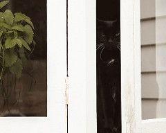 cat grass, catnip and a cat named Coffee Blake
