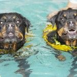2 Dogs Enjoying A Hydrotherapy Session Together Photo Galleries