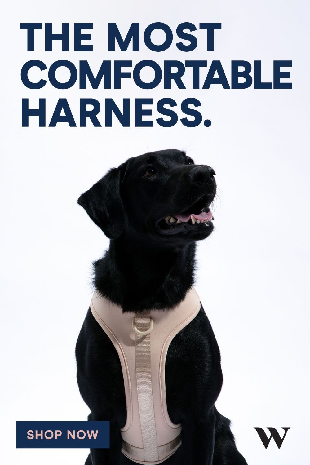 Harness Dog Harness Dogs Training Your Dog