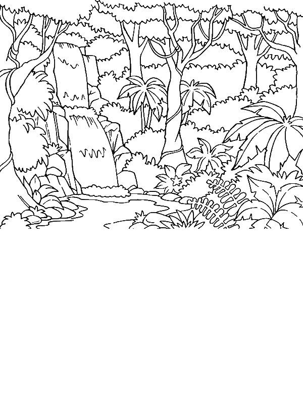 Beautiful Rainforest Coloring Page by years old