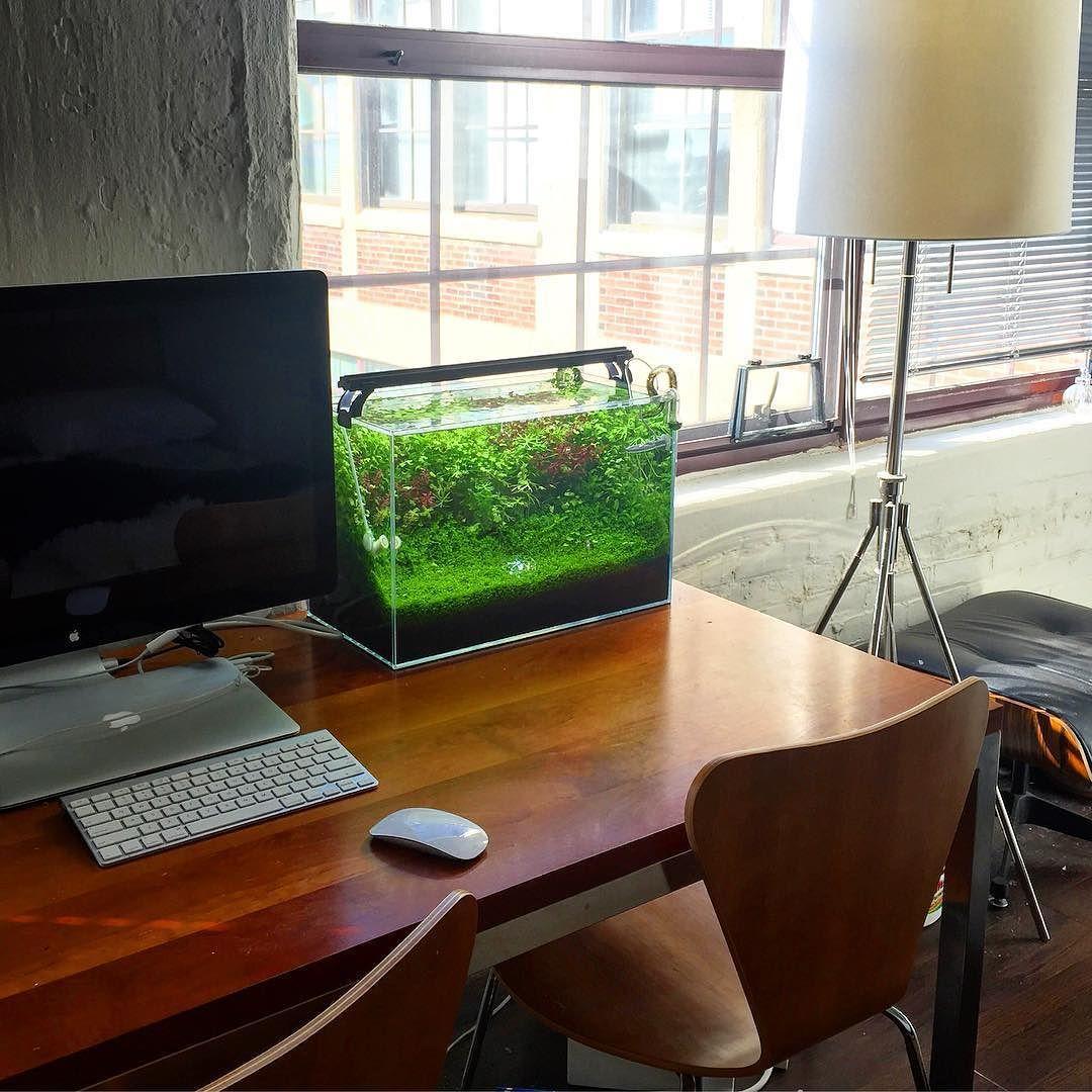 Shrimpery On Instagram A Clean Desk Natureaquarium Plantedaquarium Plantedtank Aquarium Aquascaping Shrimptank Hermanmil Fish Tank Aquarium Aquascape