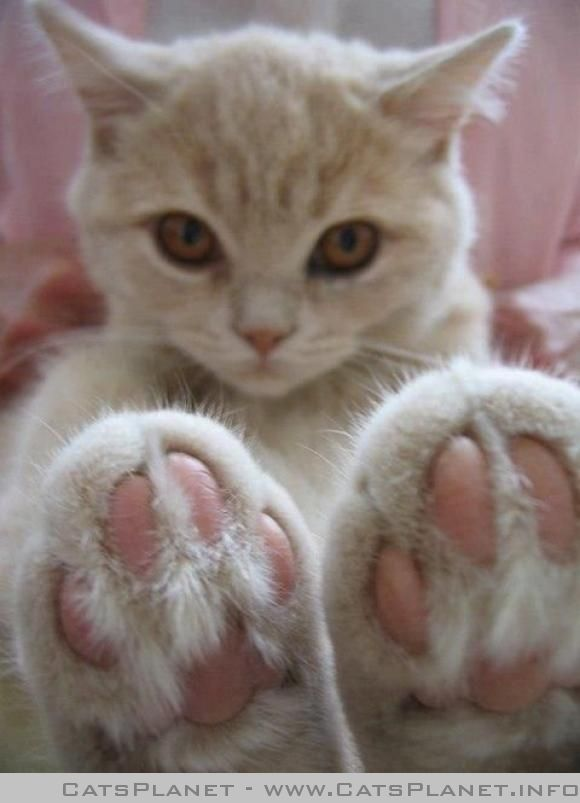 Massage my paws