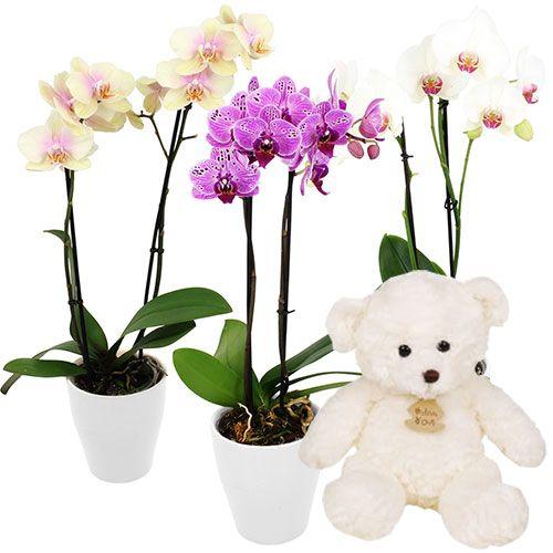1 Orchidee 2 Branches Ourson Blanc Florajet Com Fleur De Naissance Fleurs Asiatiques Orchidee