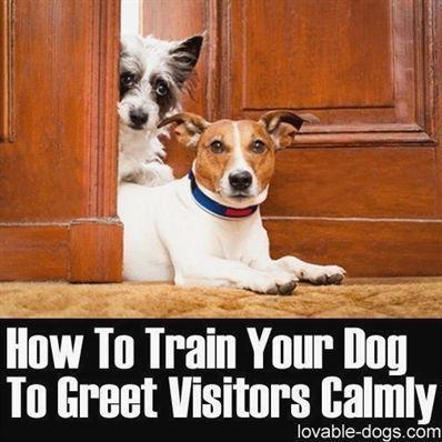 Long Dog Training Lead Dog Training Visalia Dog Training 3