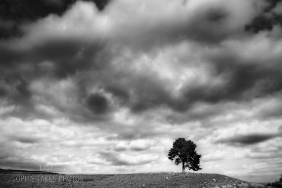 Art photography tree on the hill fine art nature and landscape photography print by sophie takes photos girls stockpiles