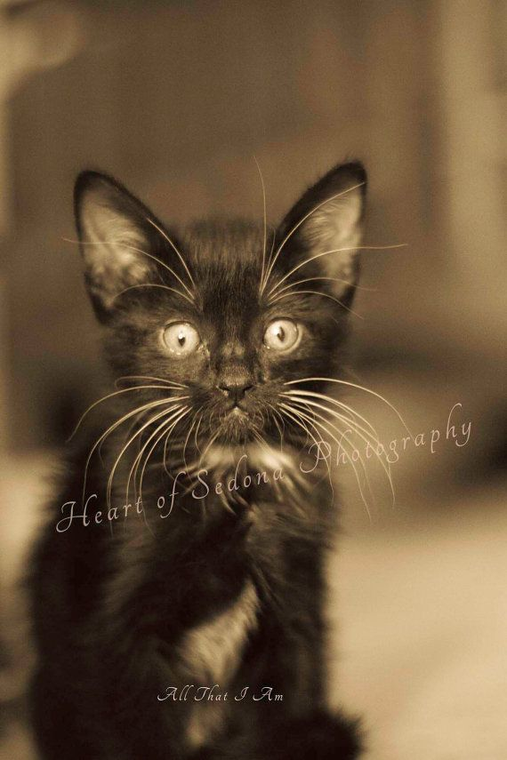 Hey, I found this really awesome Etsy listing at http://www.etsy.com/listing/177106723/black-kitty-black-and-white-photo-black