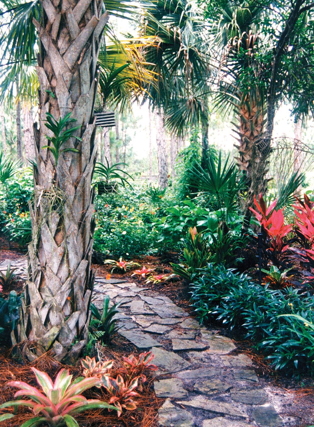 A flagstone path is surrounded by tropical vegetation in this Palm ...