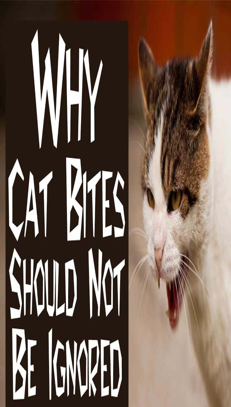 How To Deal With Cat Bites Cat Biting Cats Cat Health