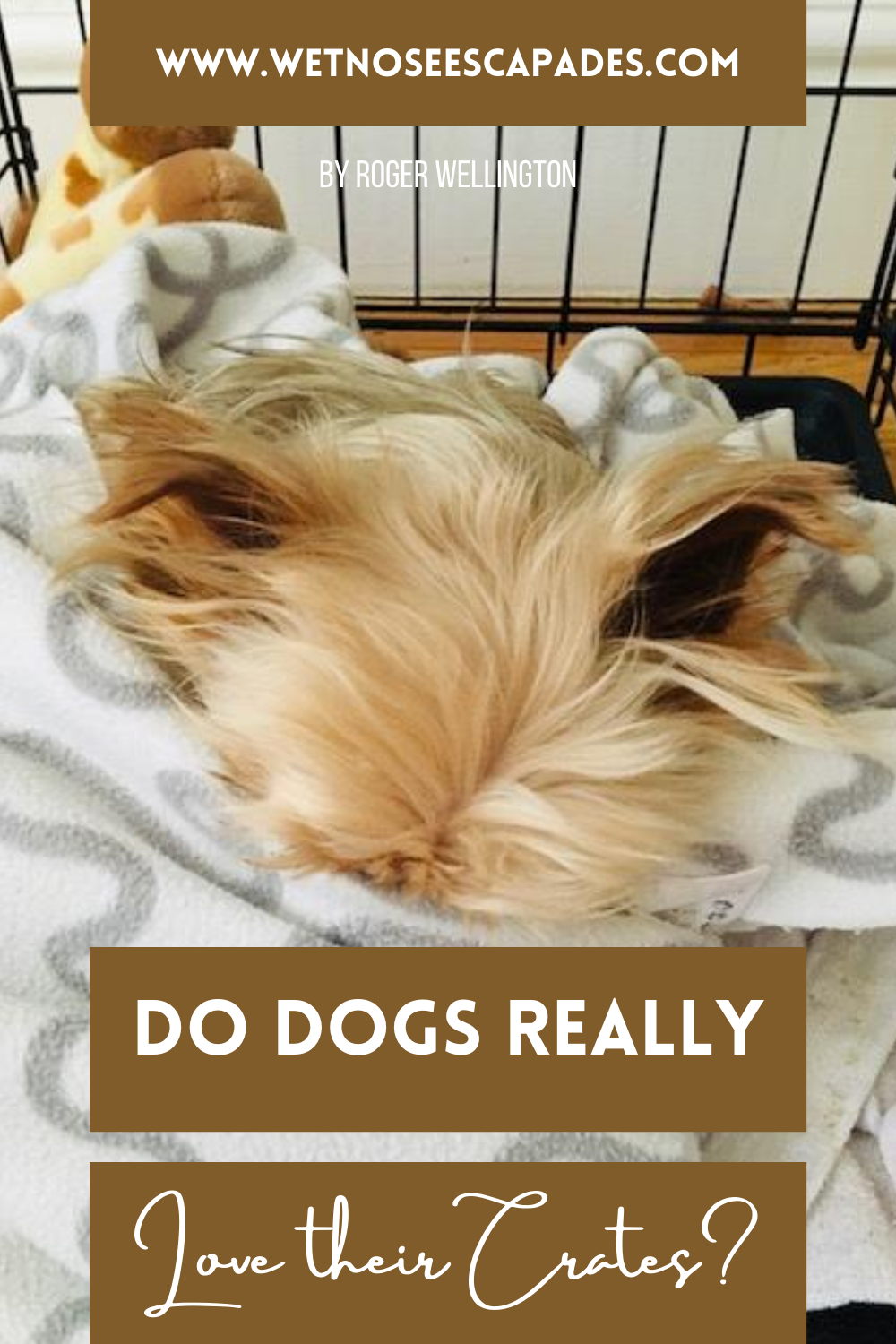 6 Dog Crate Training Misconceptions Debunked In 2020