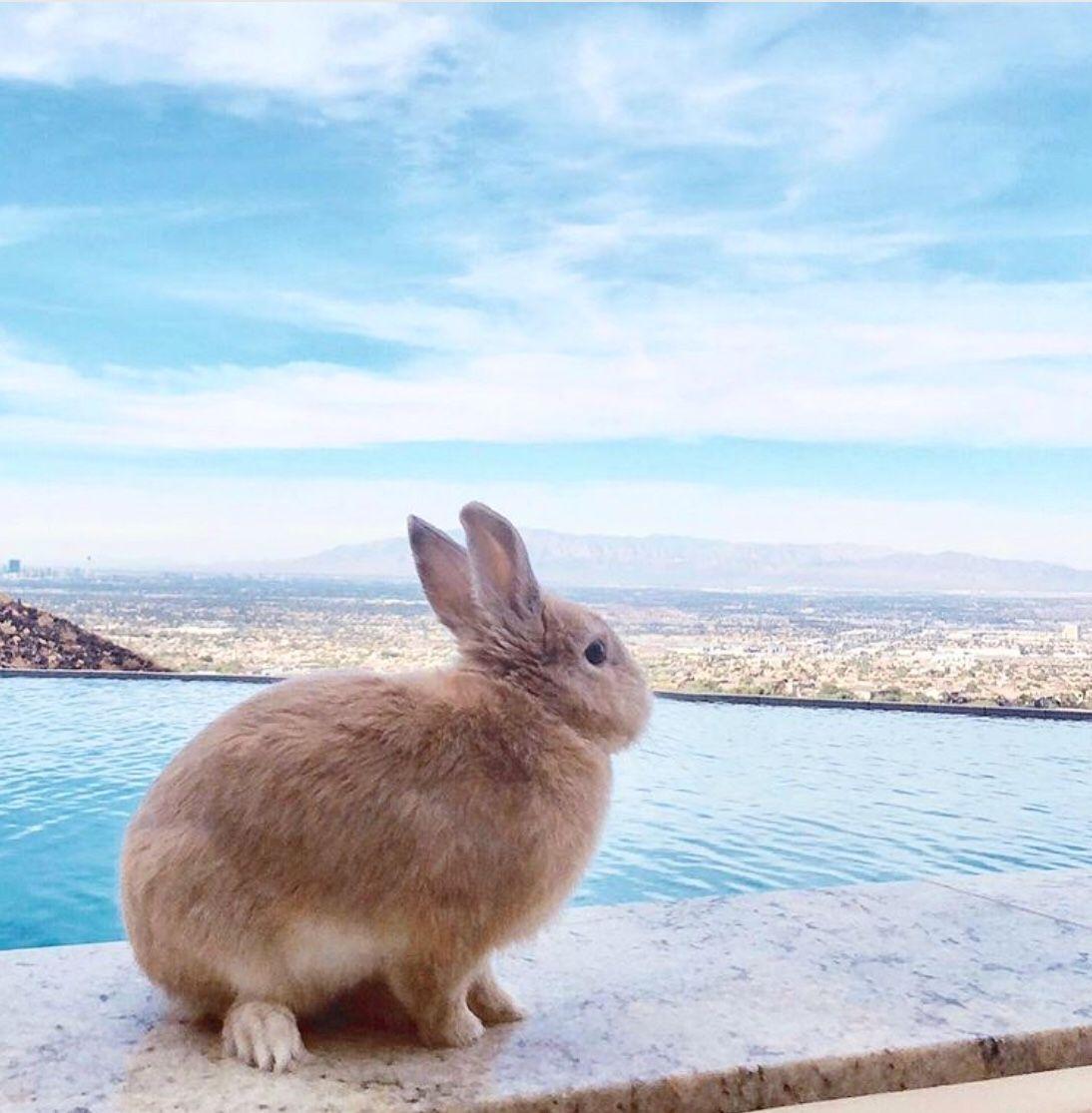Pin by Adam Burt on Rabbits Cute animals, Baby animals