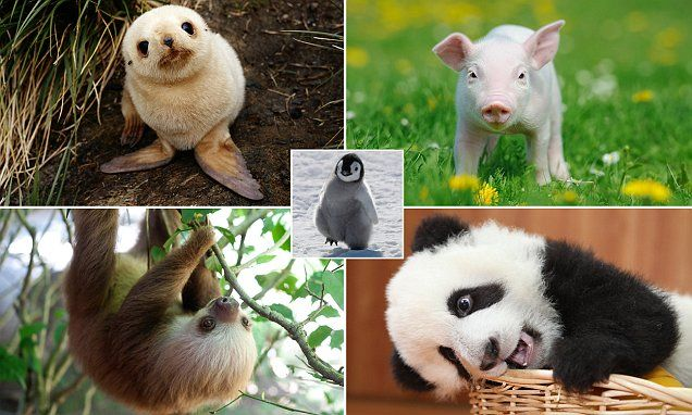 Adorable baby animals, and where in the world to find them #DailyMail